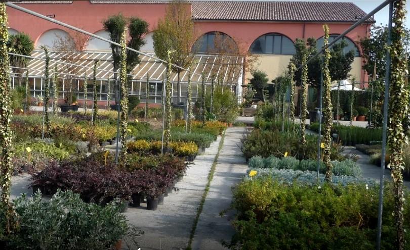 Vivaio pesaresi piante e realizzazione giardini for Architettura del verde