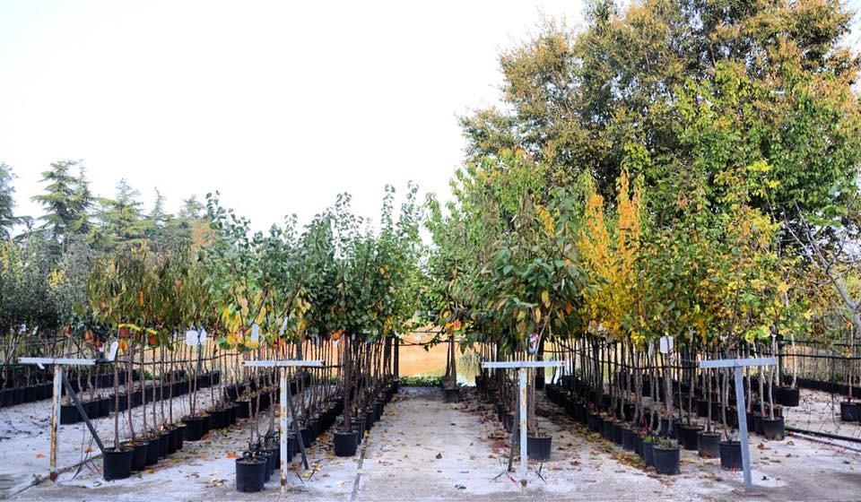 Autunno, la stagione perfetta per le piante da frutto!!