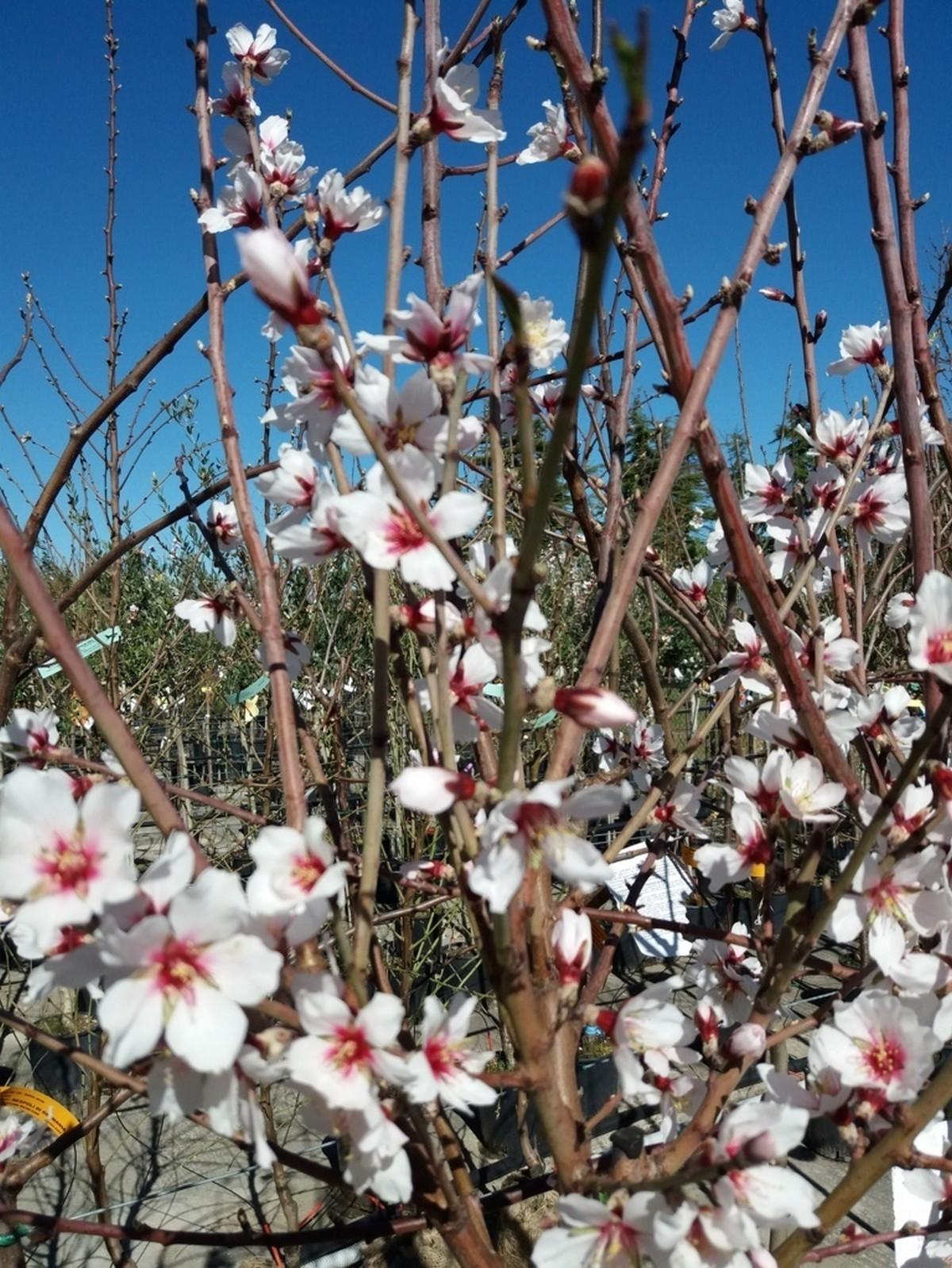 Produzione Piante Da Frutto : Piante da frutto vivaio f lli pesaresi