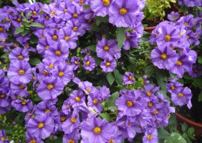 fioriture_stagionali_1