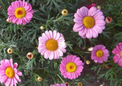 fioriture_stagionali_12
