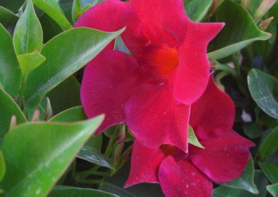 fioriture_stagionali_15