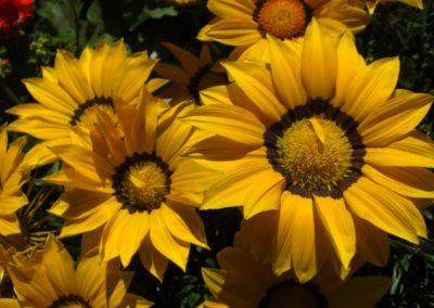 fioriture_stagionali_16