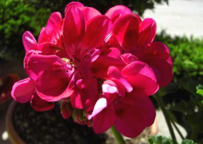 fioriture_stagionali_18