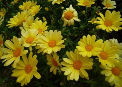 fioriture_stagionali_2