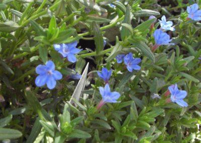 fioriture_stagionali_20