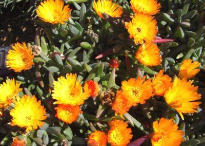 fioriture_stagionali_22