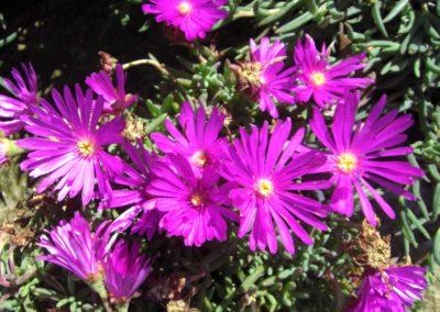 fioriture_stagionali_23