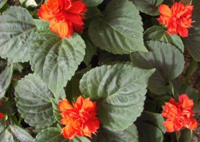 fioriture_stagionali_3