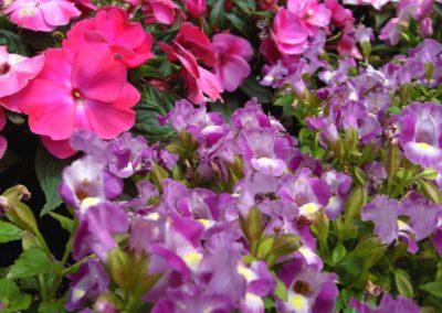 fioriture_stagionali_32
