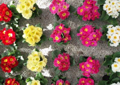 fioriture_stagionali_4