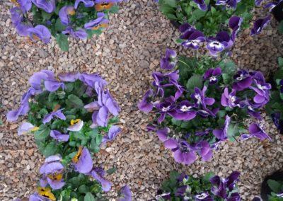 fioriture_stagionali_5