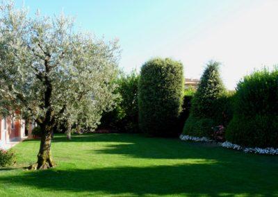 giardino_ulivo_1