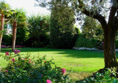 giardino_ulivo_2