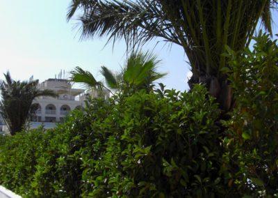 hotel_ambasciatori_riccione5