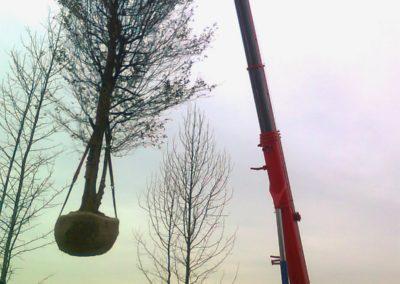 messa_a _dimora_alberi_esemplari_1