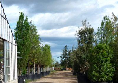 vivaio_filari_alberi