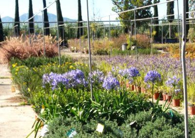 varietà di arbusti sui piazzali