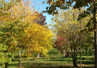 vivaio_pieno_campo_alberi_autunno